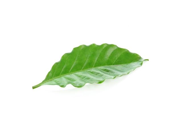 白で隔離の新鮮な緑のコーヒーの葉 Premium写真