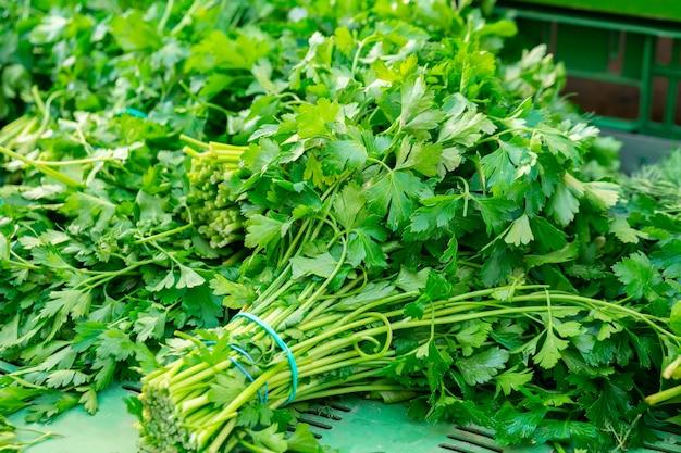 Свежий зеленый кориандр на уличном рынке. овощной.