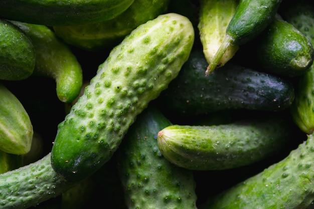 Fresh green cucumber. natural organic food