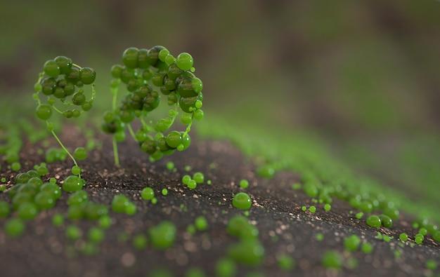 メドウクローズアップマクロレンダリングの新鮮な緑の幻想的な野生植物
