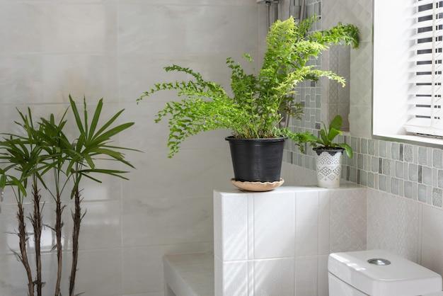 Украшение из свежего зеленого папоротника в современном туалете или ванной комнате
