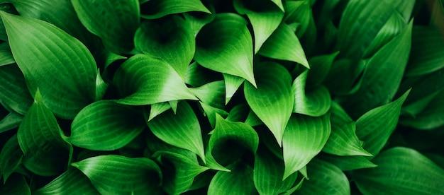 Fresh green foliage. leaves