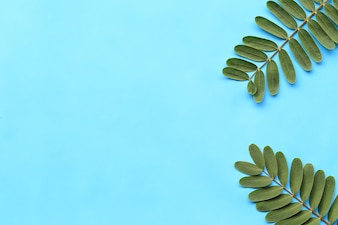 Fresh green foliage on blue paper background.