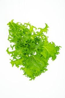 신선한 녹색 frisee 양상추 잎 흰색 배경에 고립입니다.