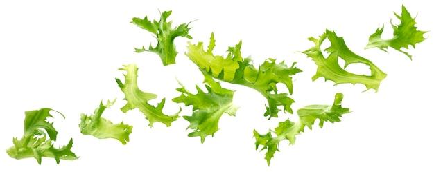 신선한 녹색 프리제 양상추 잎에 고립 된 흰색 배경