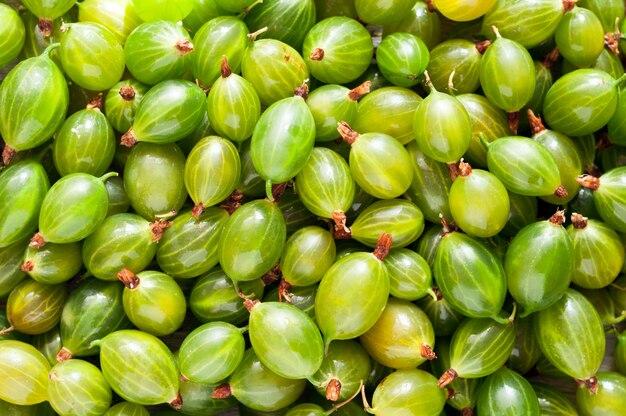 Fresh green gooseberries background. gooseberries texture
