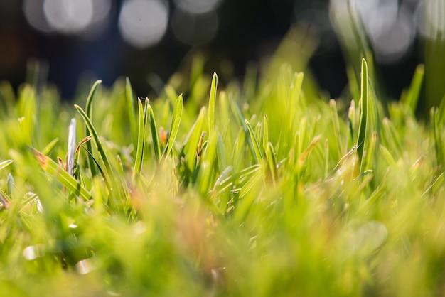 Свежая зеленая трава и боке