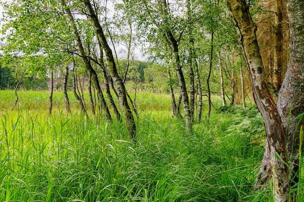 谷の新鮮な緑の草と小さな木