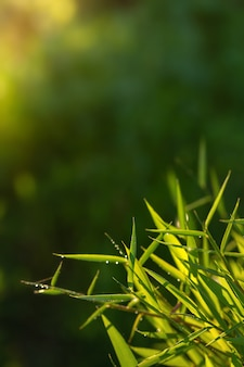 Fresh green grass in early morning.nature eco friendly photo background.