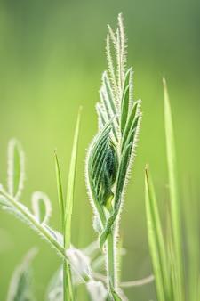 牧草地の新鮮な緑の草