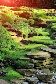 日光の下で新鮮な緑の芝生、庭の美化