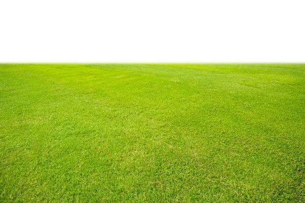 Свежий зеленый газон на белом фоне
