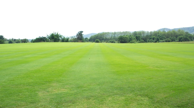 新鮮な緑の芝生または芝生のフィールド