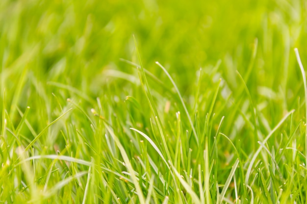Fresh green grass macro background