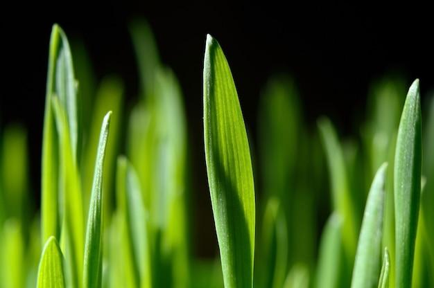 블랙에 신선 하 고 녹색 잔디입니다. 확대.