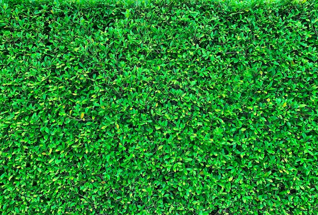 Fresh green grass texture background Premium Photo
