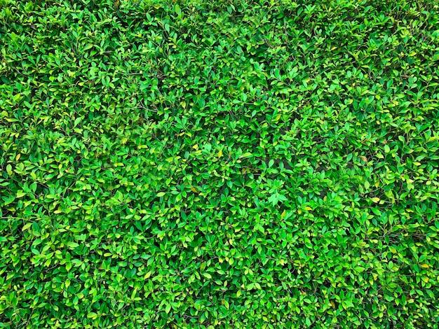 Fresh green grass texture background Premium Photo