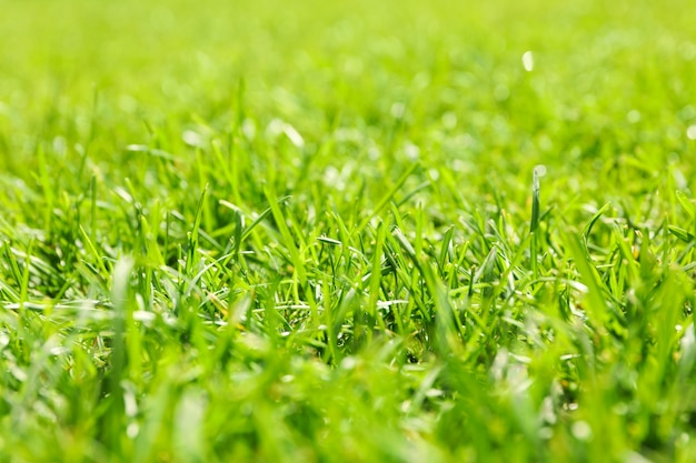 Fresh green grass texture. natural background, close up