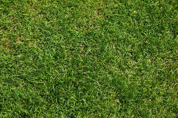 Fresh green grass texture. natural background, space for text
