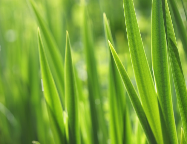 Свежая зеленая трава с каплей воды на солнце, крупным планом
