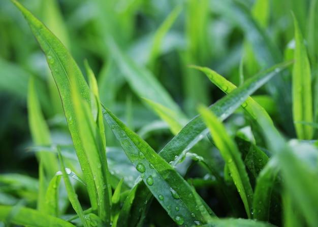 Свежая зеленая трава с каплей воды на солнце