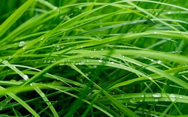 물과 신선한 녹색 잔디 상품 근접, 물과 신선한 녹색 잔디의 배경 삭제합니다. 배경 잔디의 근접 질감