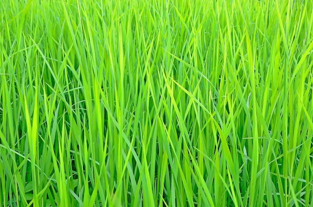 新鮮な緑の草