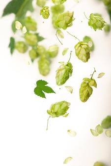 白い背景で隔離の新鮮な緑のホップの枝。ビールやパンを作るためのホップコーン。閉じる