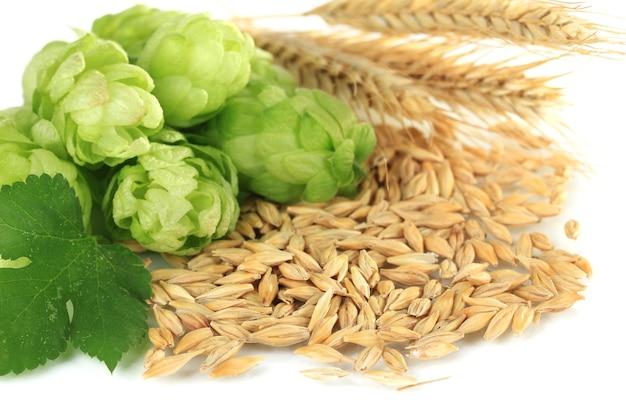 新鮮な緑のホップと大麦、白で隔離