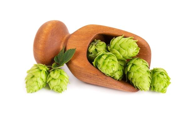 Свежая зеленая ветвь хмеля в деревянном ковше, изолированном на белой предпосылке. шишки хмеля с листом. органические цветы хмеля. закройте вверх.