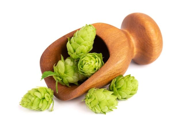 Ветвь свежего зеленого хмеля в деревянном ковше, изолированные на белом фоне, шишки хмеля с органическими листьями