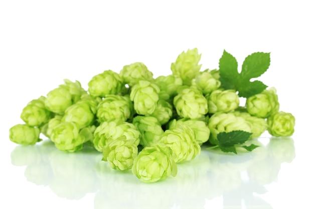 新鮮な緑のホップ、白で隔離