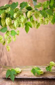 Свежий зеленый хмель на деревянном фоне.