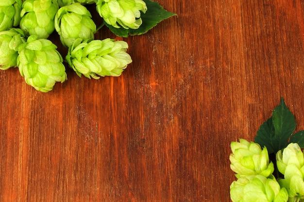 Свежий зеленый хмель на деревянной стене