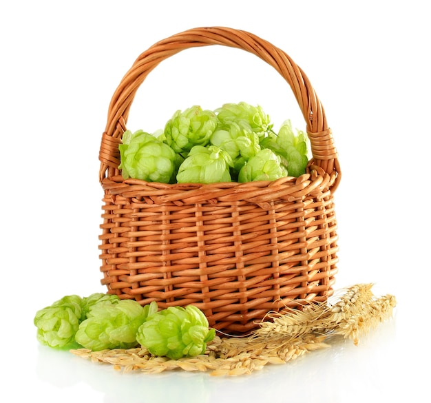 Fresh green hops in wooden basket and barley isolated on white