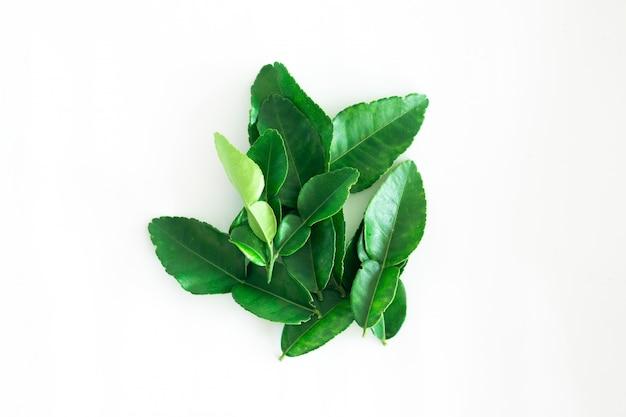 Fresh green kaffir lime leaves isolated on white background, ingradient for asia's food