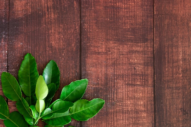 Fresh green kaffir lime leaves on wooden desk background, ingradient for asia's food with copy space