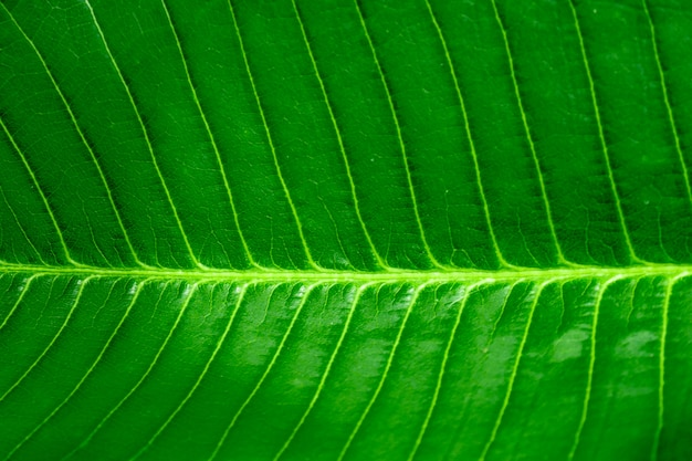 Fresh green leaf background close-up view,horizontal green leaf and spot focused.