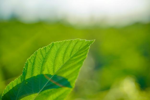 新鮮な緑の葉のビューを閉じる