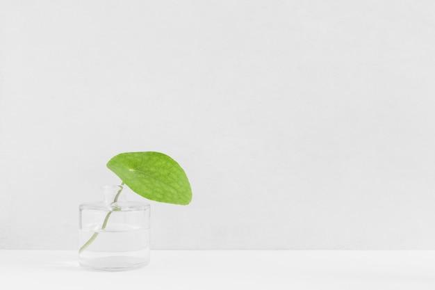 白い背景にガラスびんの新鮮な緑の葉