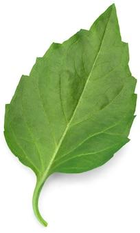 Свежий зеленый лист, изолированные на белом фоне