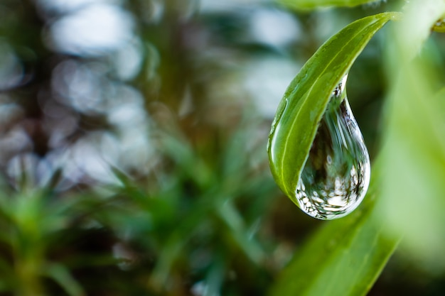 Свежие зеленые лист конца-вверх завода с падением воды на ем на фоне листвы.