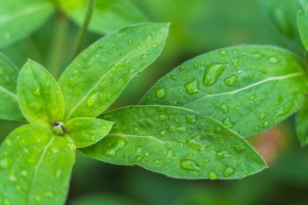Fresh green leaf with rain drop background