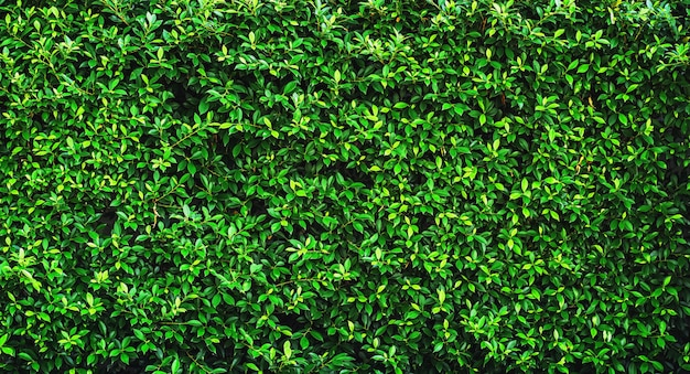 Fresh green leave background texture