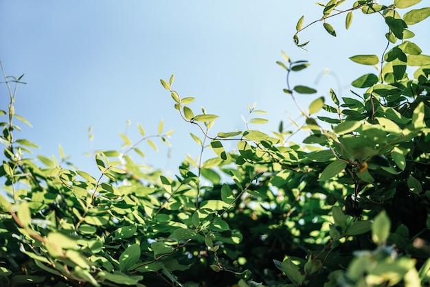 복사 공간이 있는 푸른 하늘 자연 배경에 대한 신선한 녹색 잎