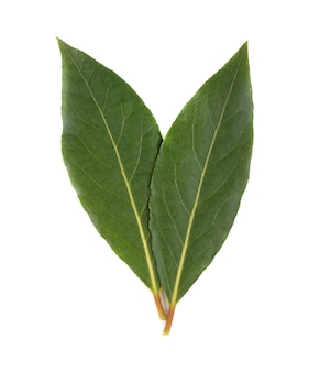 Fresh green leaves of bay leaf isolated on white . laurus isolated.