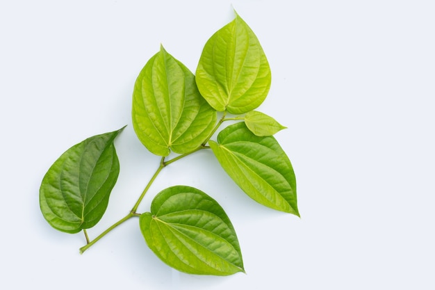 Fresh green leaves of betel plant on white surface