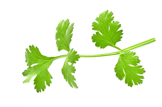 Fresh green leaves of coriander isolated on white surface