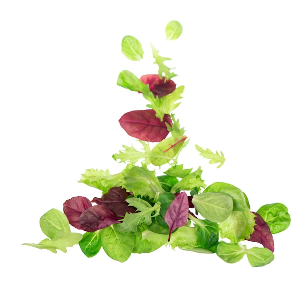 白い背景で隔離の新鮮な緑の葉レタスサラダ