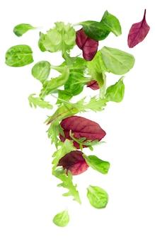 白い背景で隔離の新鮮な緑の葉レタスサラダ Premium写真